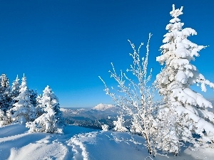 winter, Snowy, Spruces, Mountains