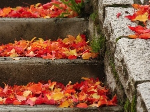 Stairs, color, Leaf