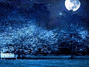 star, Bench, Night, moon, Park