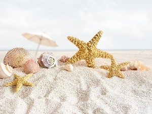 starfish, Beaches, Shells