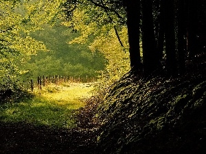 sun, autumn, Path, rays, forest