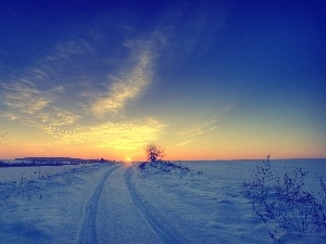 field, west, sun, winter