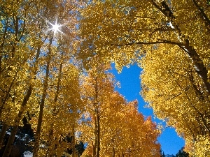 forest, Leaf, sun, Yellow