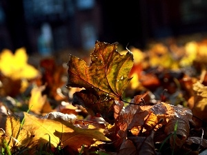 ligh, Leaf, flash, forest, Autumn, sun, luminosity