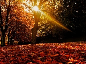 ligh, forest, flash, Przebijaj?ce, autumn, sun, luminosity