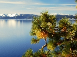 Tahoe, California, Mountains, twig, lake