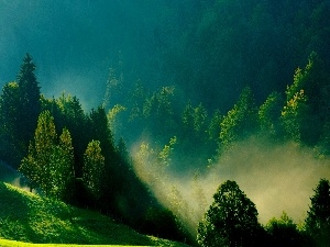 Morning, green ones, The Hills, Fog
