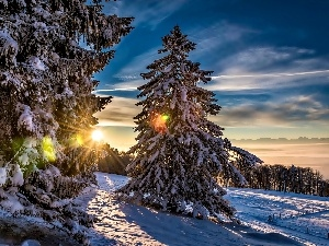 forest, trees, glamour, viewes, sun, snow, winter, rays
