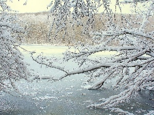 Frozen, branch pics, trees, River
