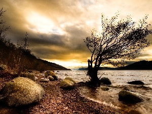 River, coast, trees, Stones