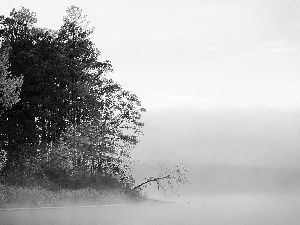 trees, viewes, forest, Fog, lake