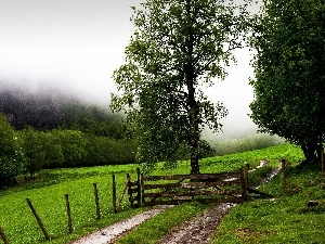trees, viewes, Path, fence, Meadow