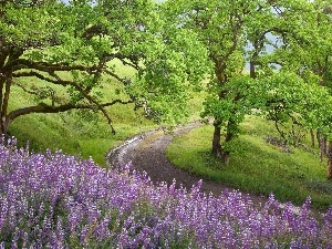 trees, viewes, Violet, lupine, Way