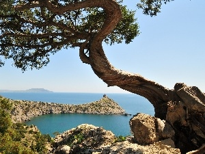rocks, braided, trunk, sea