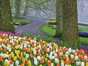 Tracks, viewes, Tulips, trees