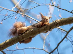 twig, squirrel, trees