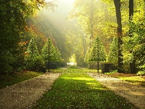 sun, Park, viewes, Alleys, trees, rays