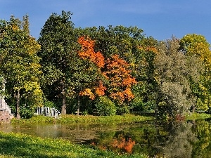 viewes, autumn, lake, trees, Park