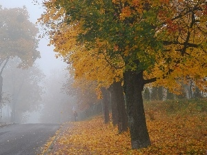 viewes, Fog, Way, trees, autumn