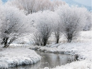 viewes, White frost, River, trees, winter