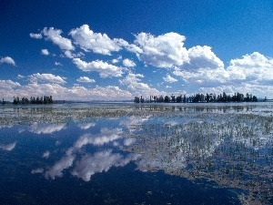 lake, trees, viewes, clouds