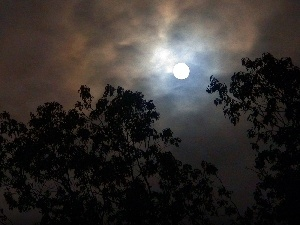 Night, trees, viewes, moon