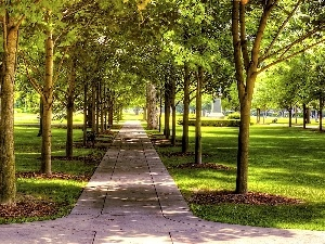Park, trees, viewes, lane