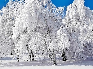viewes, Snowy, trees