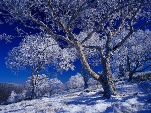 winter, trees, viewes, frosty