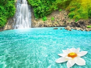 Colourfull Flowers, rocks, waterfall
