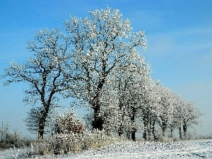 winter, viewes, White frost, trees