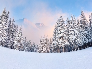 winter, Mountains, forest
