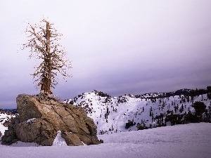 Mountains, trees, winter, Rocks